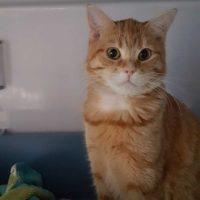 feline-rad-3-370x370
